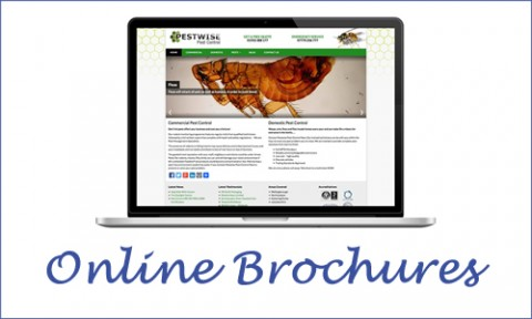 online web brochure design